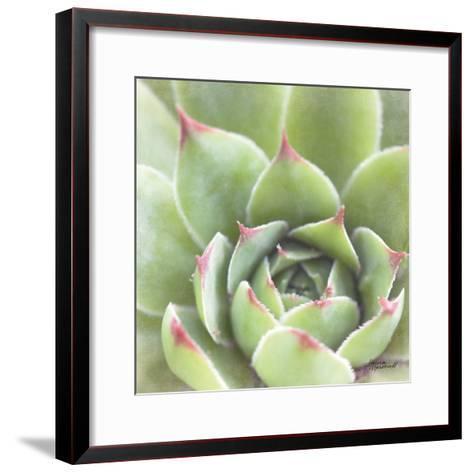 Garden Succulents III Color-Laura Marshall-Framed Art Print