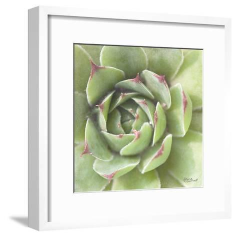 Garden Succulents II Color-Laura Marshall-Framed Art Print