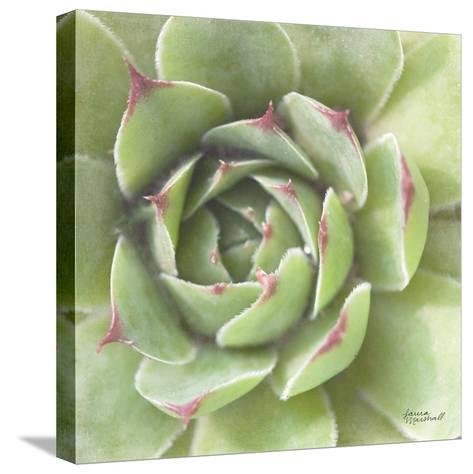Garden Succulents II Color-Laura Marshall-Stretched Canvas Print