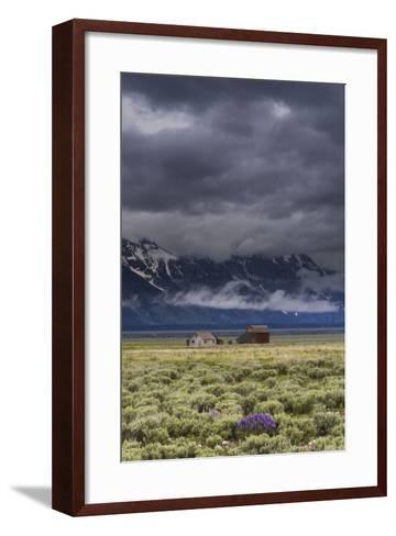 A Lone Lupine Sets The Foreground For The Moulton Structures In Grand Teton National Park, Wyoming-Jay Goodrich-Framed Art Print