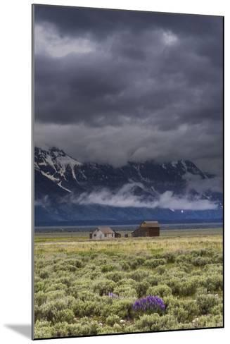 A Lone Lupine Sets The Foreground For The Moulton Structures In Grand Teton National Park, Wyoming-Jay Goodrich-Mounted Photographic Print