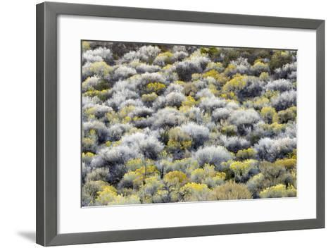 Rabbit Brush And Silver Sage Bloom In Late Season Color Along The Shores Of Mono Lake-Jay Goodrich-Framed Art Print