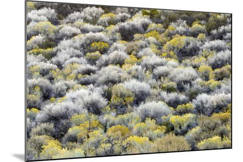 Rabbit Brush And Silver Sage Bloom In Late Season Color Along The Shores Of Mono Lake-Jay Goodrich-Mounted Photographic Print