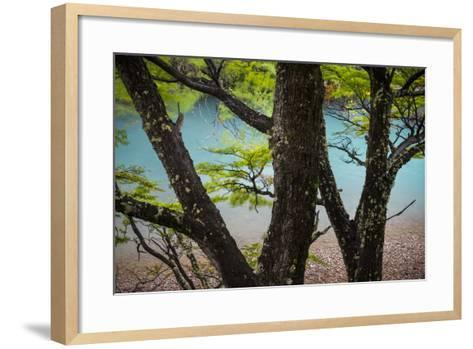A Glacier River Flows Through Wind Driven Beech Trees In Los Glacieres National Park, Argentina-Jay Goodrich-Framed Art Print