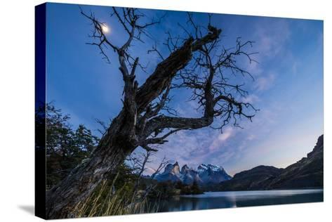 Chile, Magallanes Region, Torres Del Paine National Park, Lago Pehoe, Landscape, Dawn-Jay Goodrich-Stretched Canvas Print