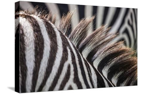 Sepilok Orangutan Rehabilitation Centre, Malaysia Ngorongoro Crater, Tanzania Mt Kinabalu, Malaysia-Karine Aigner-Stretched Canvas Print