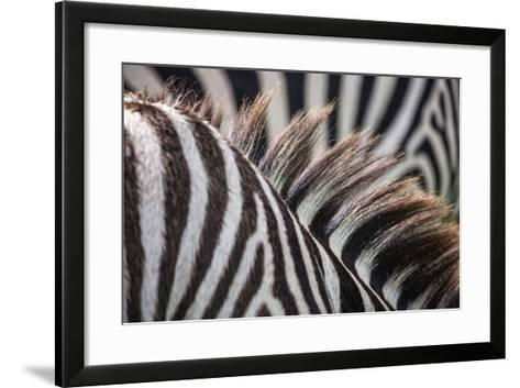 Sepilok Orangutan Rehabilitation Centre, Malaysia Ngorongoro Crater, Tanzania Mt Kinabalu, Malaysia-Karine Aigner-Framed Art Print