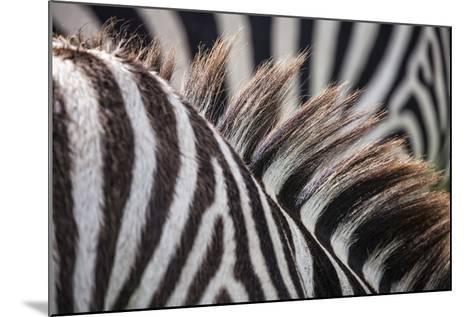 Sepilok Orangutan Rehabilitation Centre, Malaysia Ngorongoro Crater, Tanzania Mt Kinabalu, Malaysia-Karine Aigner-Mounted Photographic Print