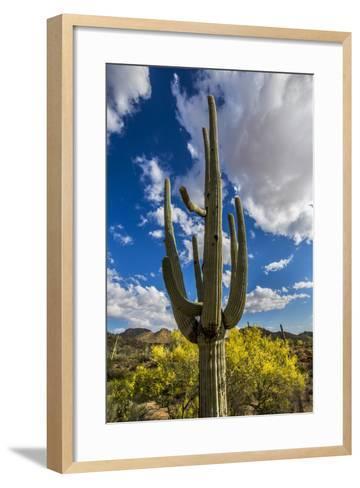 Saguaro National Park, Arizona-Ian Shive-Framed Art Print