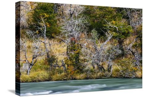 Fall Colors On Southern Beach Along The Rio Paine In Torres Del Paine NP, Patagonia, Chile-Jay Goodrich-Stretched Canvas Print