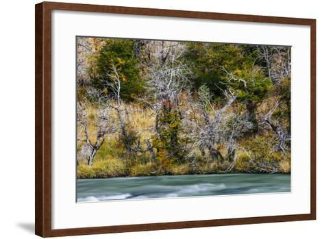 Fall Colors On Southern Beach Along The Rio Paine In Torres Del Paine NP, Patagonia, Chile-Jay Goodrich-Framed Art Print