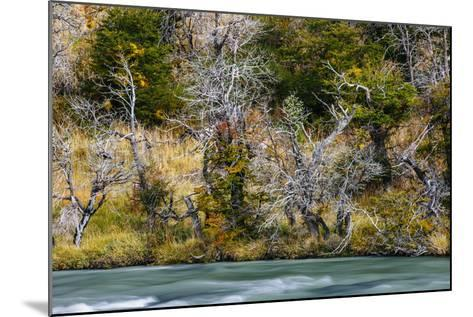 Fall Colors On Southern Beach Along The Rio Paine In Torres Del Paine NP, Patagonia, Chile-Jay Goodrich-Mounted Photographic Print