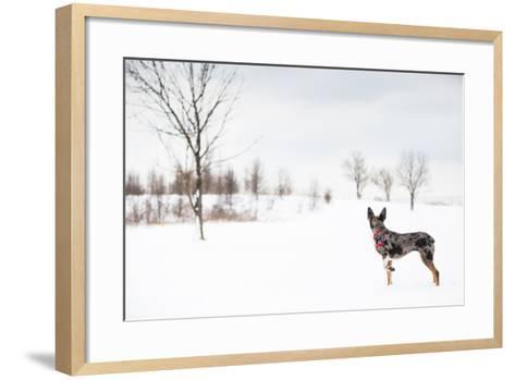 An Australian Shepherd, Cattle Dog Mix Pup Takes A Walk In The Snow-Karine Aigner-Framed Art Print