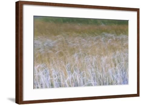 Patterns Of Grasses Along An Unnamed Marsh In Torres Del Paine National Park Chile, South America-Jay Goodrich-Framed Art Print
