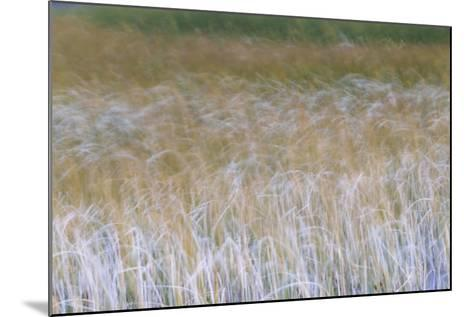 Patterns Of Grasses Along An Unnamed Marsh In Torres Del Paine National Park Chile, South America-Jay Goodrich-Mounted Photographic Print