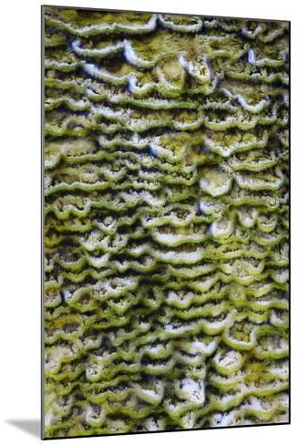 Green Bacteria Form Stepping Patterns, Minerals Cascade Out, Mammoth Hot Springs, Yellowstone NP-Jay Goodrich-Mounted Photographic Print