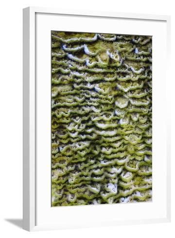 Green Bacteria Form Stepping Patterns, Minerals Cascade Out, Mammoth Hot Springs, Yellowstone NP-Jay Goodrich-Framed Art Print
