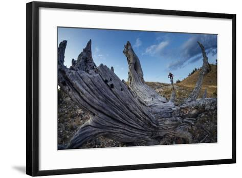 Andrew Whiteford Rides Into The Sunset Near Jackson, Wyoming-Jay Goodrich-Framed Art Print