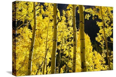 Telluride, Colorado-Justin Bailie-Stretched Canvas Print