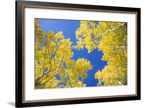 Telluride, Colorado-Justin Bailie-Framed Art Print
