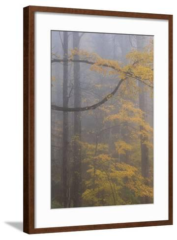 Autumn Colored Trees In Great Smoky Mountains National Park-Jay Goodrich-Framed Art Print