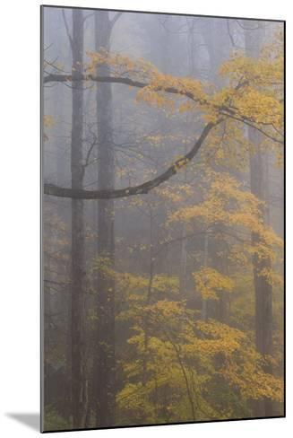 Autumn Colored Trees In Great Smoky Mountains National Park-Jay Goodrich-Mounted Photographic Print