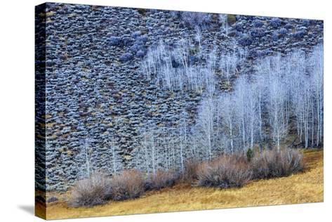 Conway Summit Along Highway 395 In The Eastern Sierras Northern California Near Mono Lake-Jay Goodrich-Stretched Canvas Print