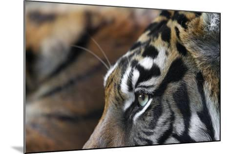 An Extreme Closeup Of A Tiger's Eye And The Pattern On Its Face-Karine Aigner-Mounted Photographic Print