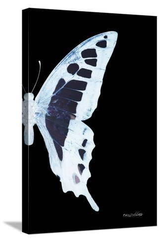 Miss Butterfly Cloanthus - X-Ray Right Black Edition-Philippe Hugonnard-Stretched Canvas Print