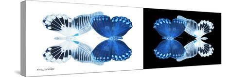 Miss Butterfly Duo Memhowqua Pan - X-Ray B&W Edition-Philippe Hugonnard-Stretched Canvas Print