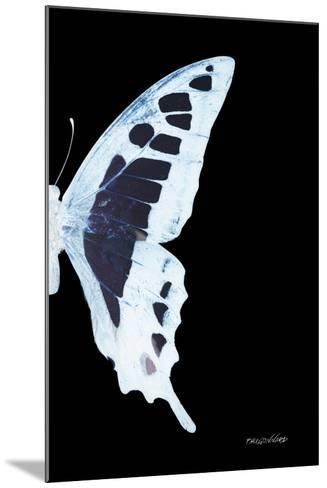 Miss Butterfly Cloanthus - X-Ray Right Black Edition-Philippe Hugonnard-Mounted Photographic Print