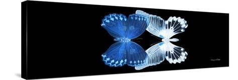 Miss Butterfly Duo Memhowqua Pan - X-Ray Black Edition II-Philippe Hugonnard-Stretched Canvas Print