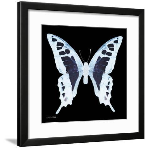 Miss Butterfly Cloanthus Sq - X-Ray Black Edition-Philippe Hugonnard-Framed Art Print