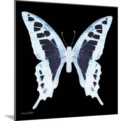 Miss Butterfly Cloanthus Sq - X-Ray Black Edition-Philippe Hugonnard-Mounted Photographic Print