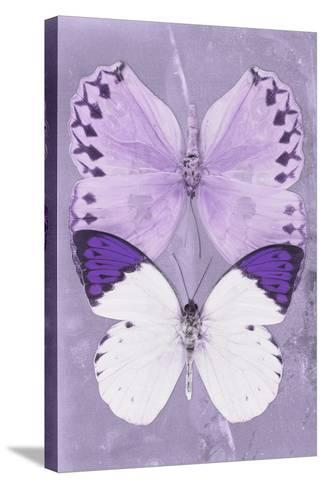 Miss Butterfly Duo Formoia II - Mauve-Philippe Hugonnard-Stretched Canvas Print