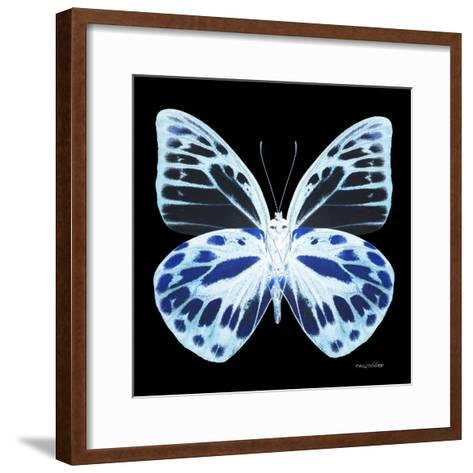 Miss Butterfly Prioneris Sq - X-Ray Black Edition-Philippe Hugonnard-Framed Art Print