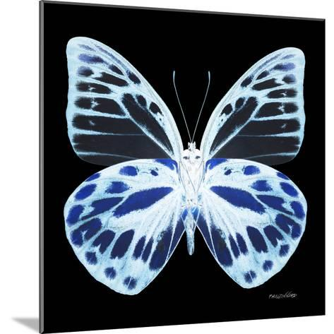 Miss Butterfly Prioneris Sq - X-Ray Black Edition-Philippe Hugonnard-Mounted Photographic Print