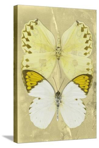 Miss Butterfly Duo Formoia II - Yellow-Philippe Hugonnard-Stretched Canvas Print