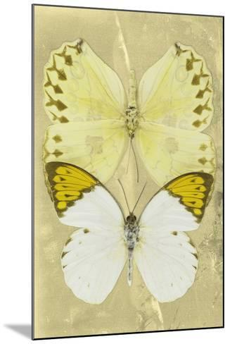 Miss Butterfly Duo Formoia II - Yellow-Philippe Hugonnard-Mounted Photographic Print