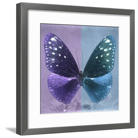 Miss Butterfly Euploea Sq - Purple & Blue-Philippe Hugonnard-Framed Art Print