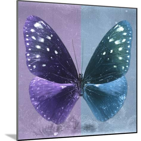 Miss Butterfly Euploea Sq - Purple & Blue-Philippe Hugonnard-Mounted Photographic Print