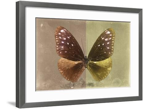 Miss Butterfly Euploea - Caramel & Gold-Philippe Hugonnard-Framed Art Print