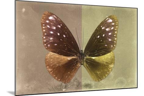Miss Butterfly Euploea - Caramel & Gold-Philippe Hugonnard-Mounted Photographic Print
