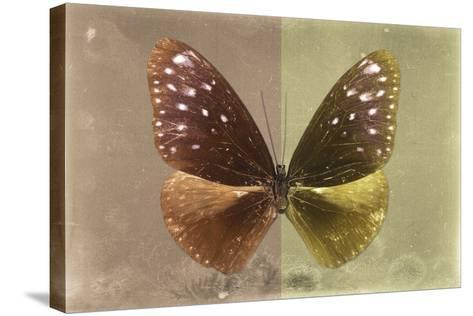 Miss Butterfly Euploea - Caramel & Gold-Philippe Hugonnard-Stretched Canvas Print