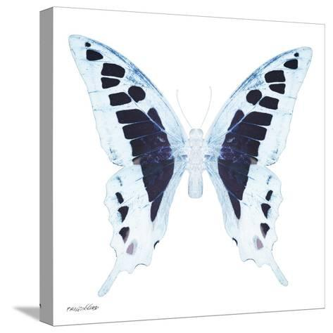 Miss Butterfly Cloanthus Sq - X-Ray White Edition-Philippe Hugonnard-Stretched Canvas Print