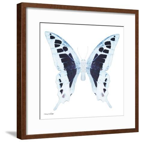 Miss Butterfly Cloanthus Sq - X-Ray White Edition-Philippe Hugonnard-Framed Art Print