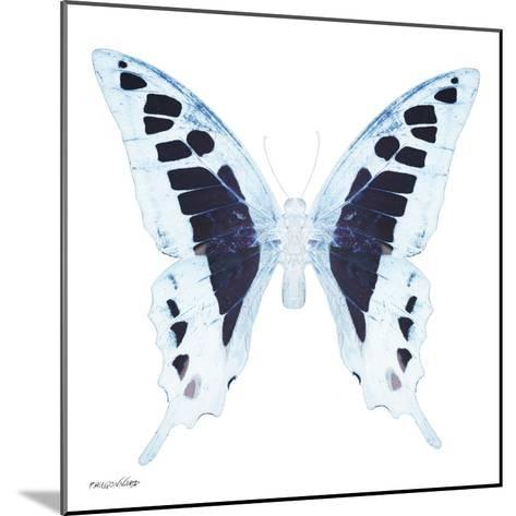 Miss Butterfly Cloanthus Sq - X-Ray White Edition-Philippe Hugonnard-Mounted Photographic Print