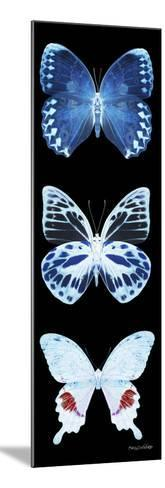 Miss Butterfly X-Ray Black Pano II-Philippe Hugonnard-Mounted Photographic Print