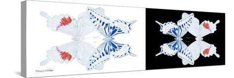Miss Butterfly Duo Parisuthus Pan - X-Ray B&W Edition-Philippe Hugonnard-Stretched Canvas Print