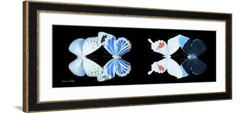 Miss Butterfly X-Ray Duo Black Pano V-Philippe Hugonnard-Framed Art Print